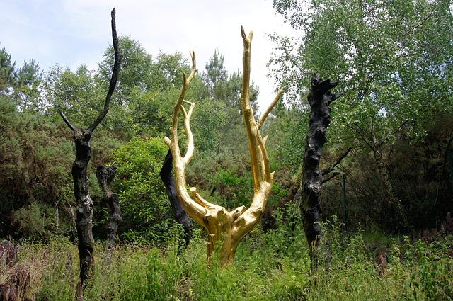 forêt de brocéliande avec chien