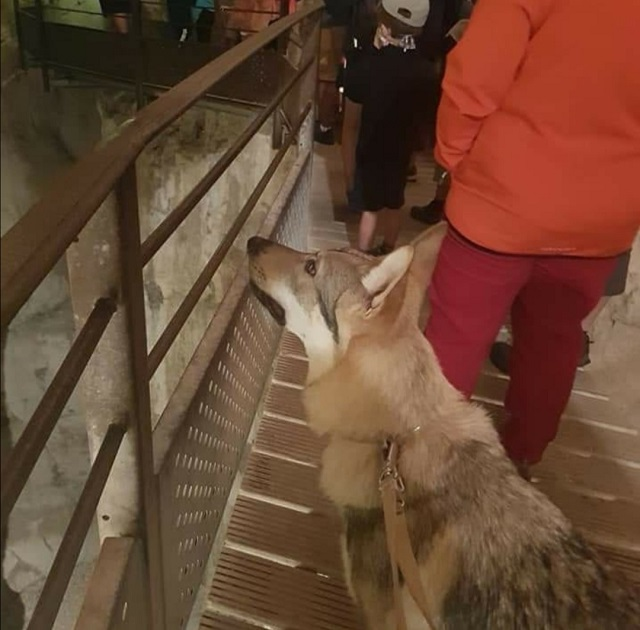 Visite saint christophe la grotte avec chien