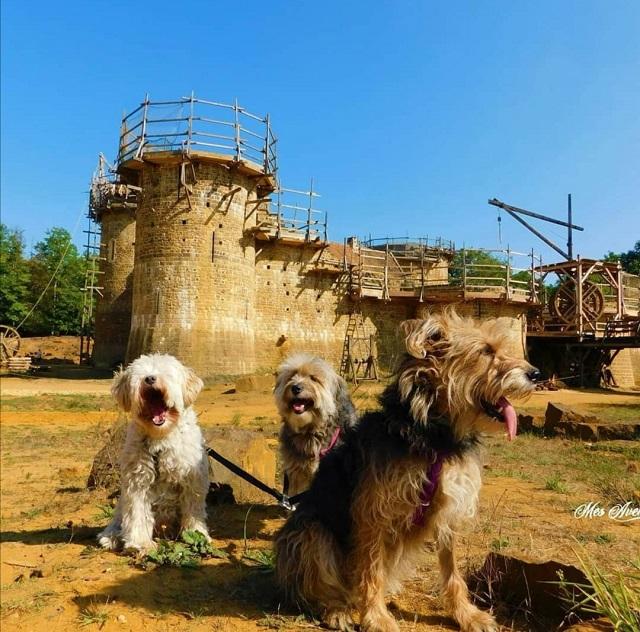 château de guédelon avec chien