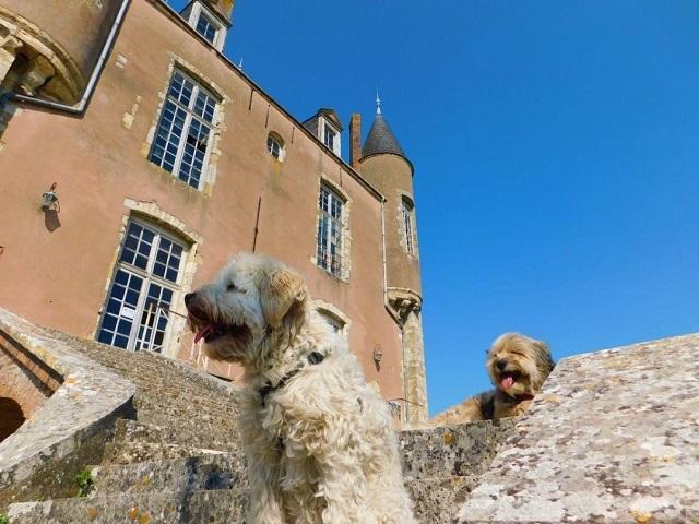 château de bellegarde avec chien