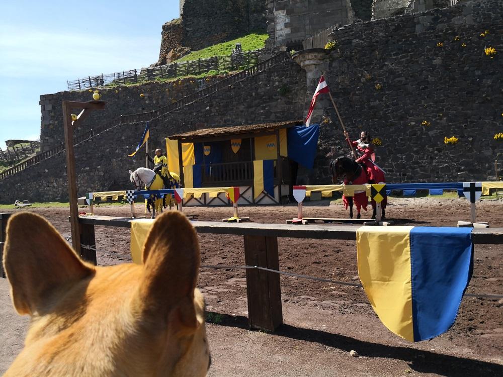 chien qui visite le chateau de murol en auvergne