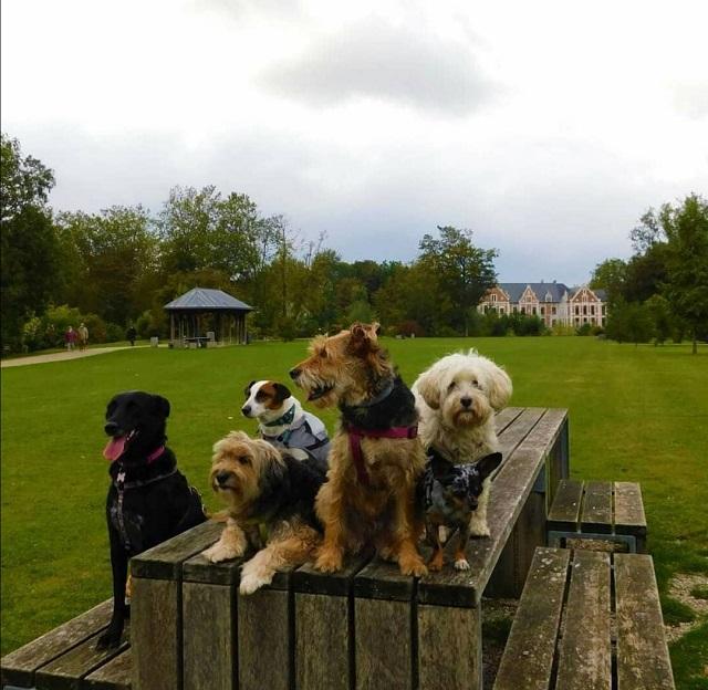château de robersart avec chien