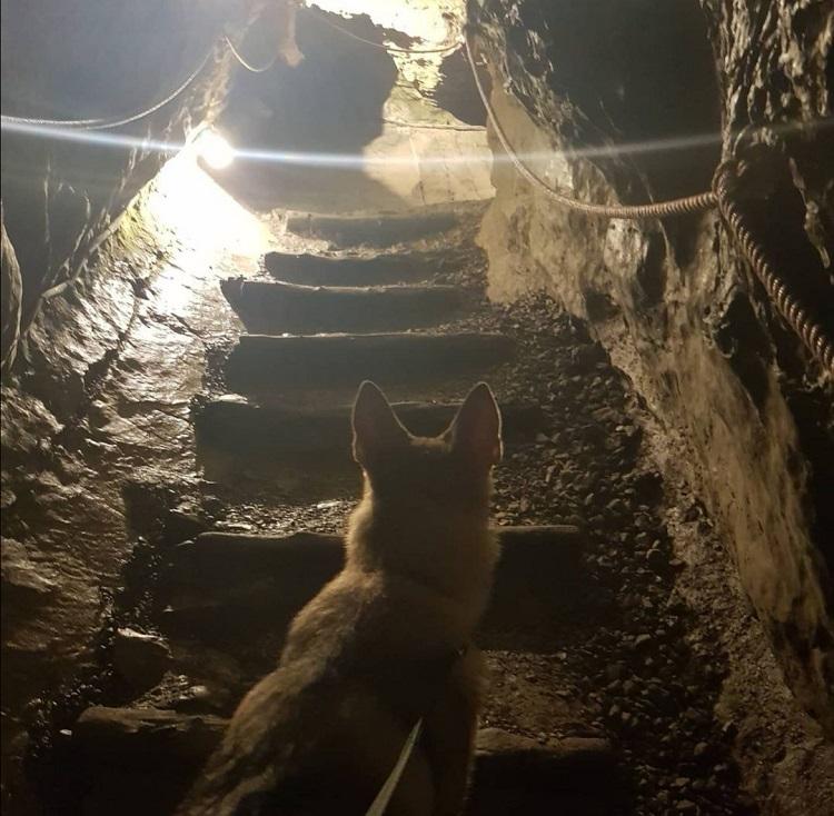 chien accepté visite en haute-savoie