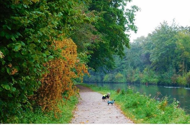 chien qui se promène au parc de vaudry fontaine