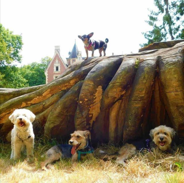 chien qui visite l'arboretum des barres loiret
