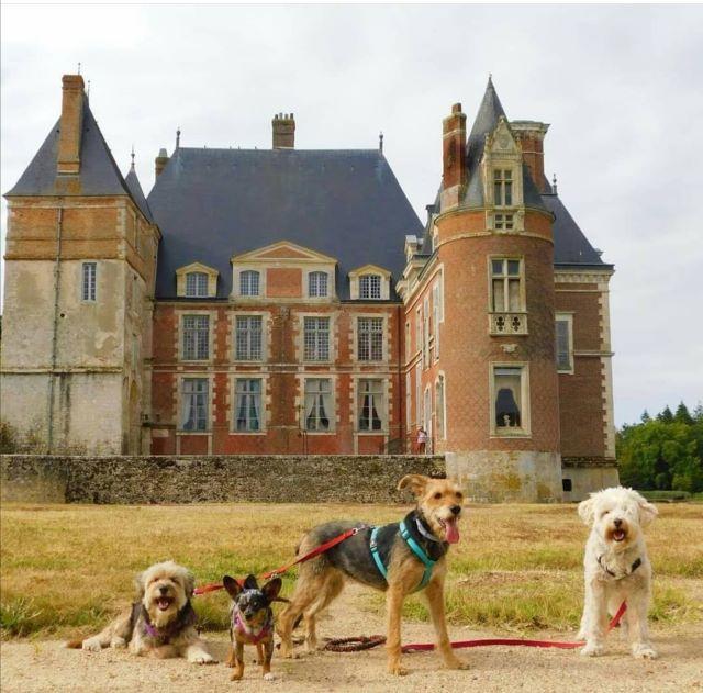 chien qui visite le château de la bussière