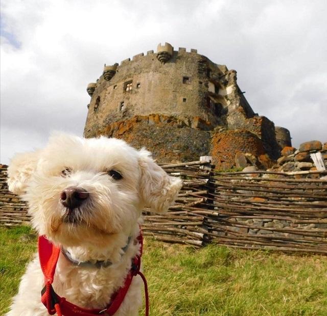 chien qui visite le château de murol