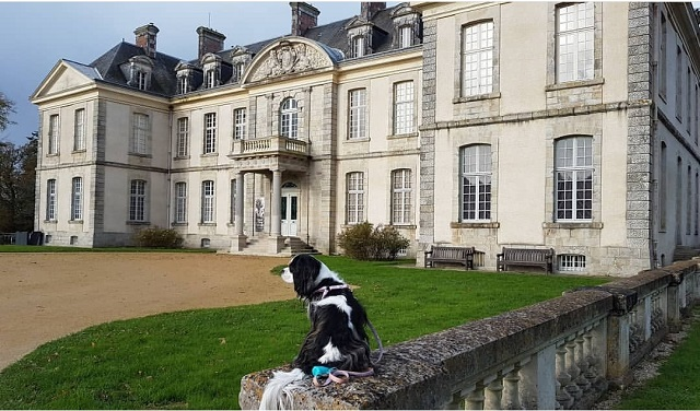 visite parc château kerguéhennec chien
