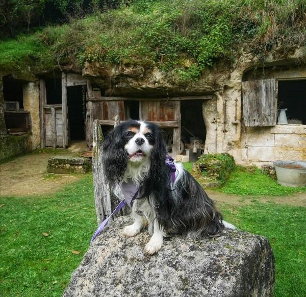 tourisme avec mon chien en Touraine