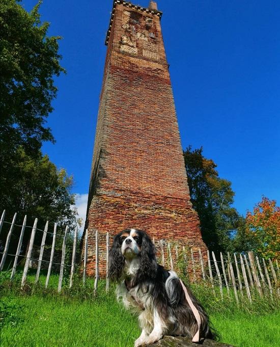 tourisme avec mon chien en Val-de-Loire pile de cinq mars