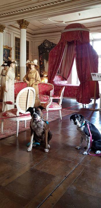 visite avec chien château d'ussé