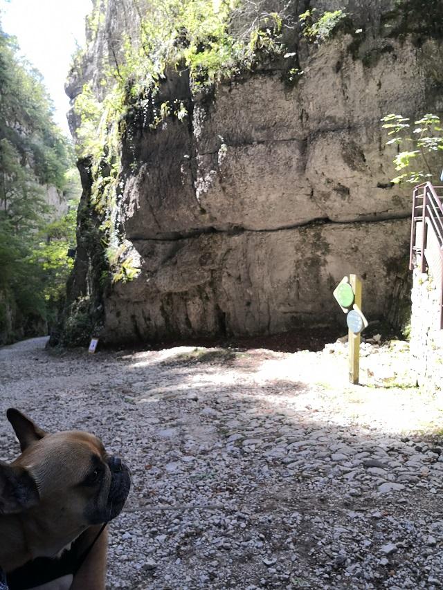visite avec chien des grottes de saint christophe