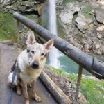 visite grotte et cascade de seythenex avec chien
