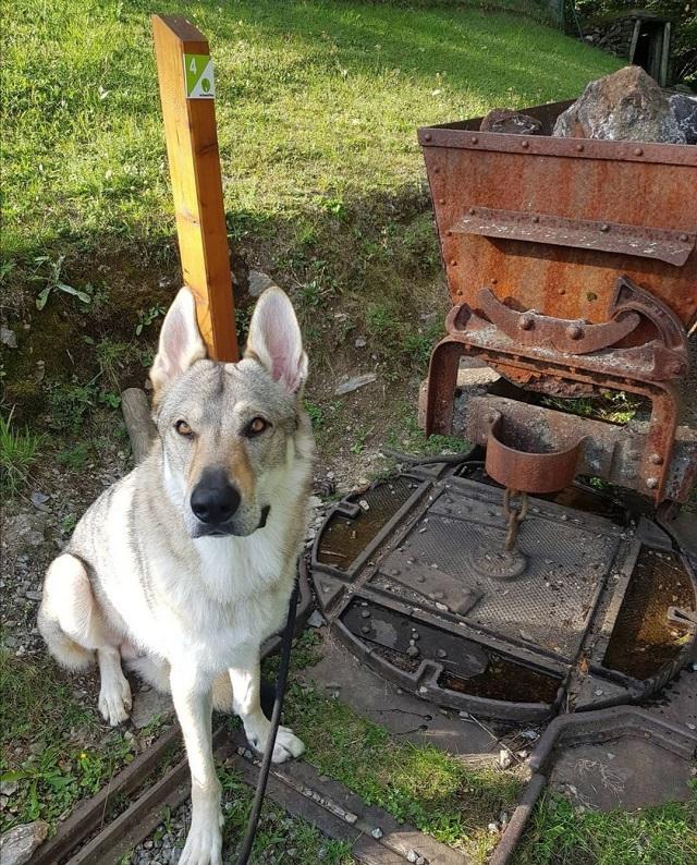 visite le grand filon avec chien