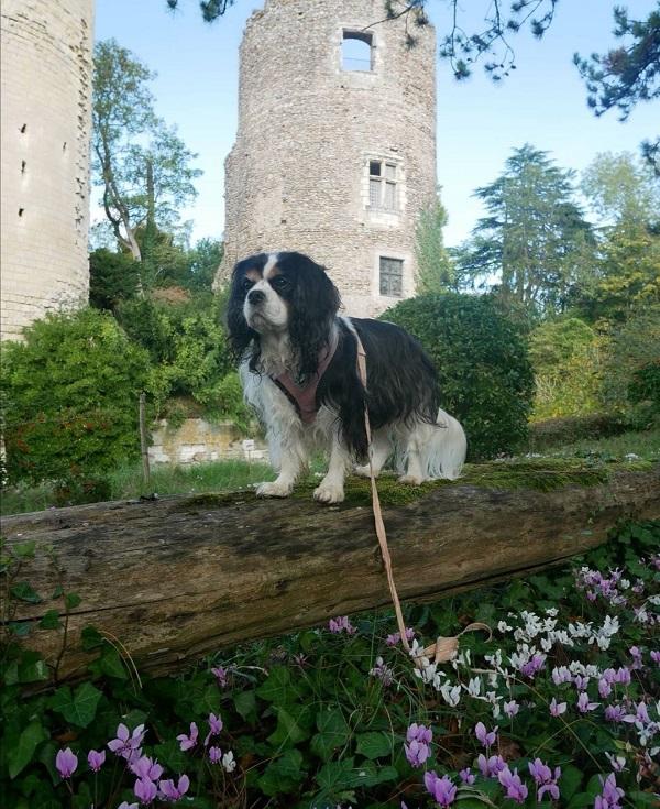 visiter le château de Cinq-Mars avec un chien