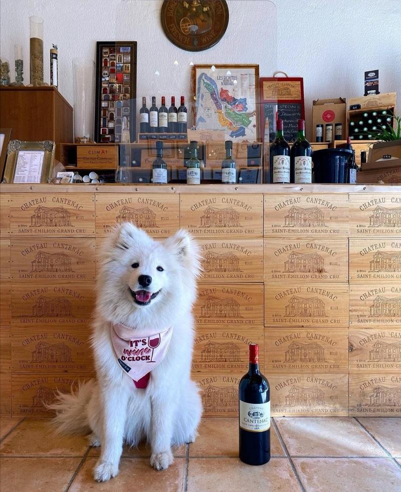 château cantenac visite vignoble avec chien saint émilion