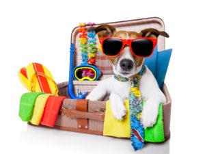 pourquoi nous rejoindre ? chien en vacance