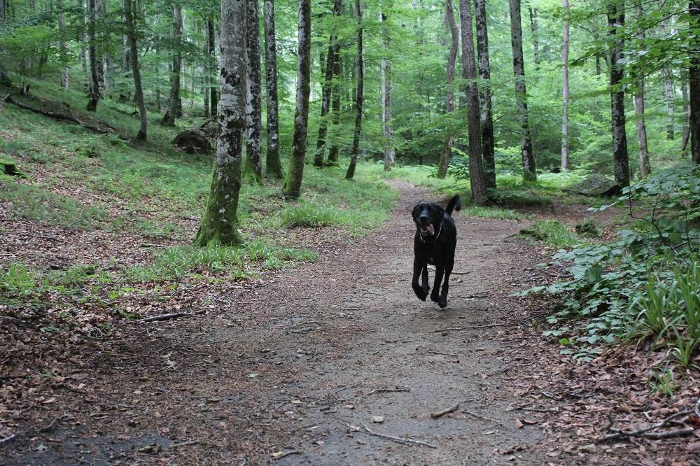 chien en vacance occitanie