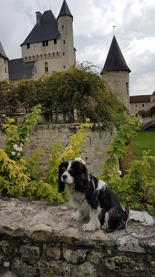 chien qui visite le château du Rivau