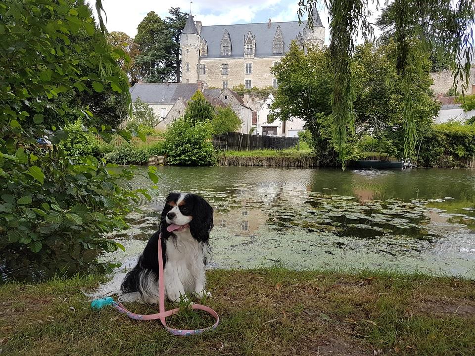 chien qui visite le château de montrésor