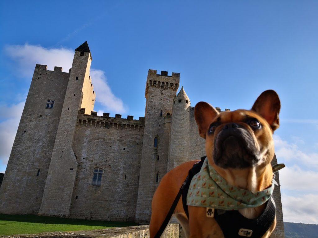 chateau de beynac avec chien