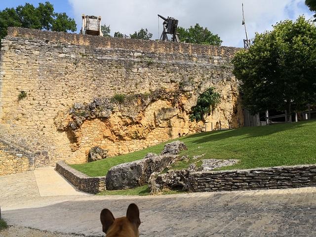 chien visite château de castelnaud