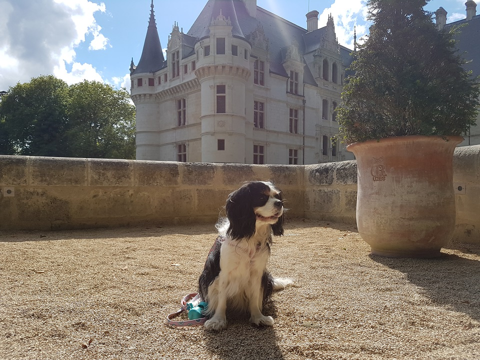chien visite château de la loire