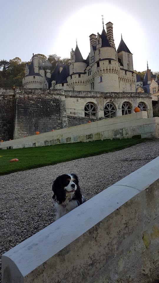 visite du château d'ussé avec chien
