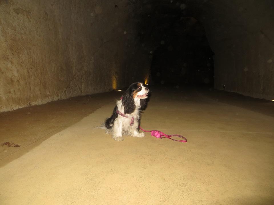 visite avec chien château de brézé