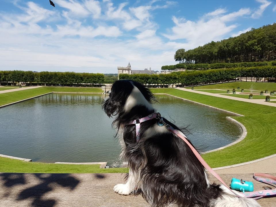 vacances en touraine avec votre chien