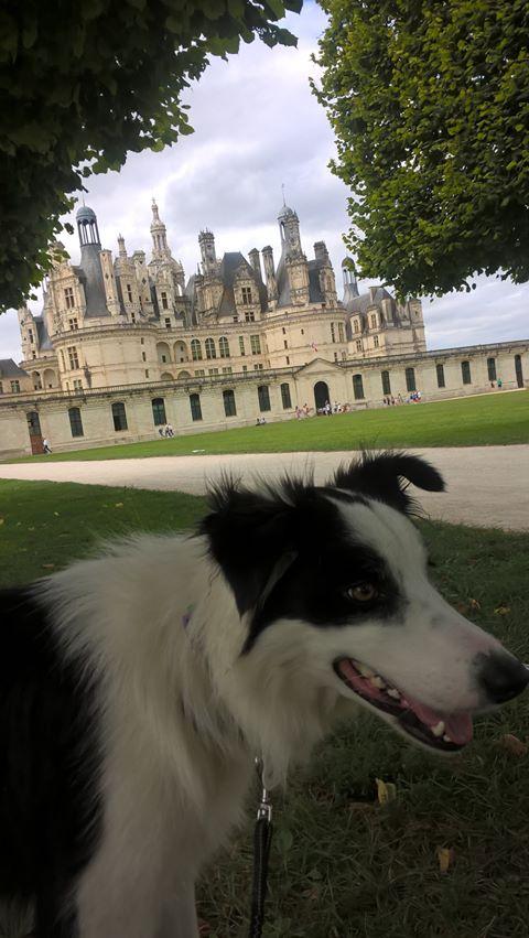 chien dans le parc du château de chambord