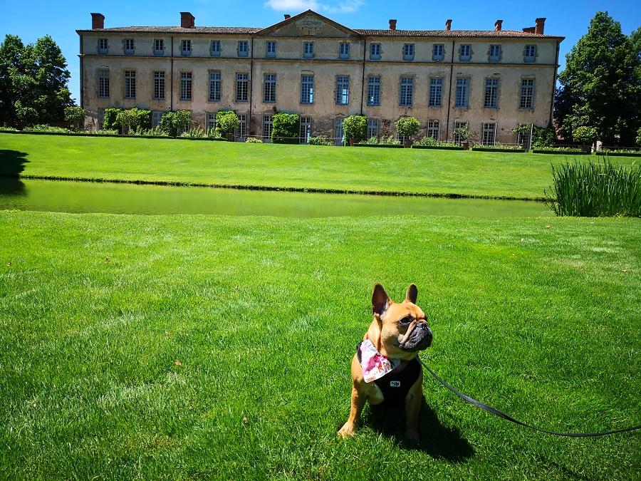chien visite parc château auvergne