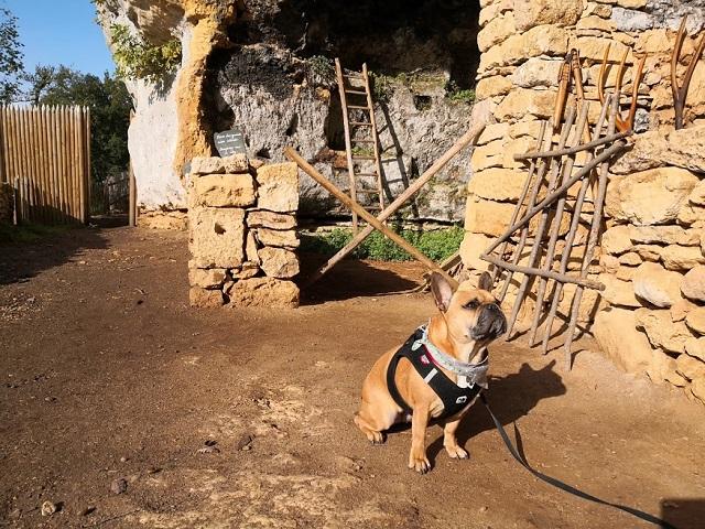 chien visite abri de la madeleine