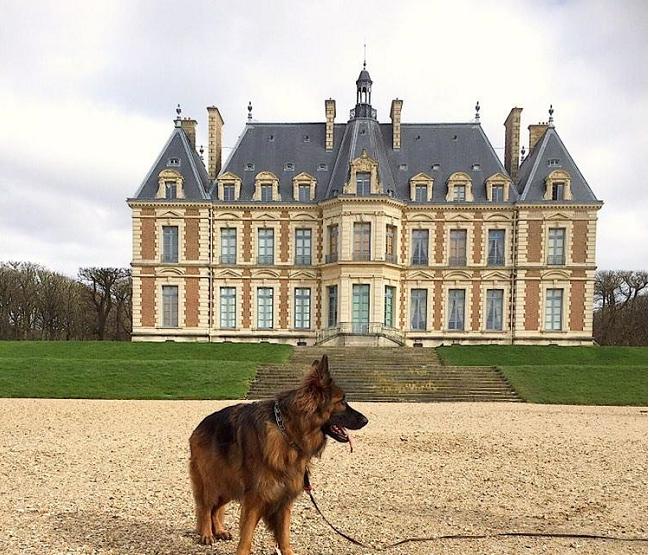 parc château de sceaux avec chien