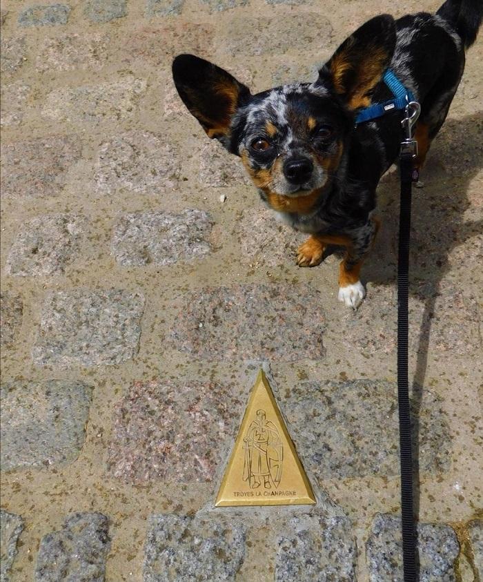 visite centre historique troyes avec chien
