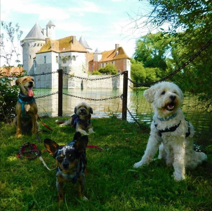 château d'ohlain avec chien