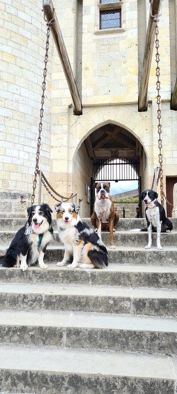 chien qui visite le chateau de langeais en touraine