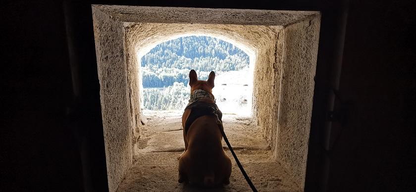 chien qui visite le fort victor emmanuel