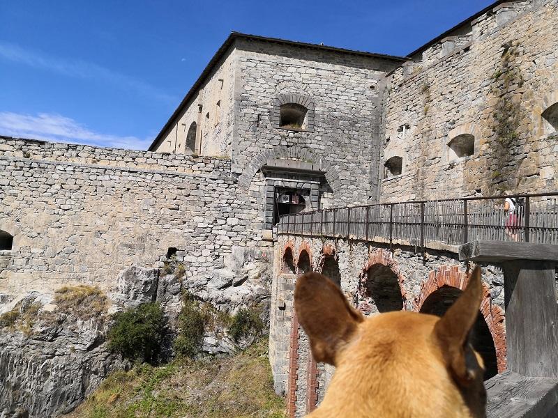 fort victor emmanuel visite avec chien