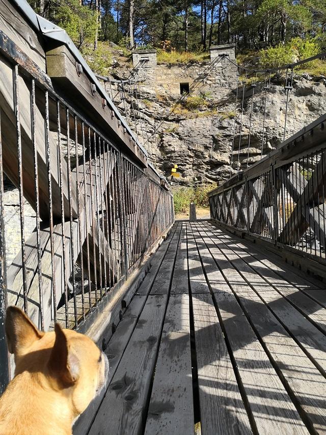 pont du diable en savoie avec chien