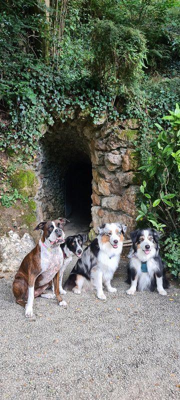 Chien qui visite une grotte pétrifiante en touraine