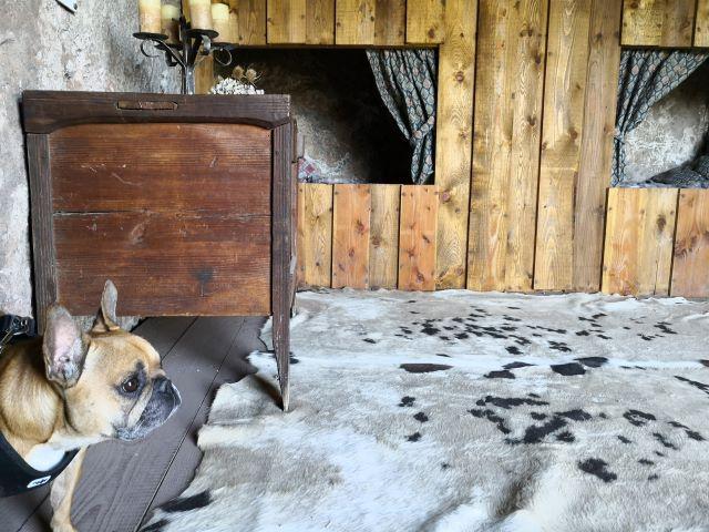 chien qui visite le site troglodyte de jonas