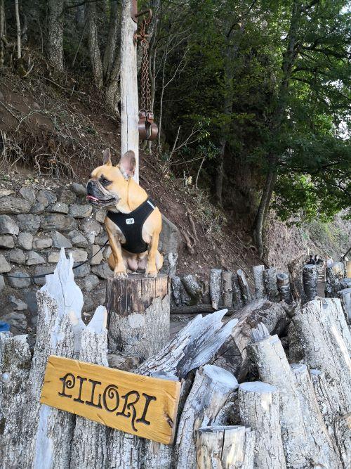 visite des grottes de jonas avec chien