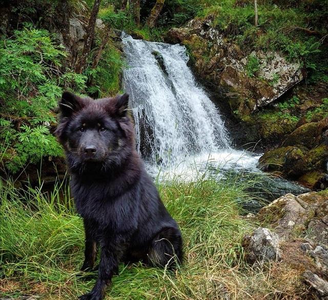 cascades d'auvergne avec votre chien