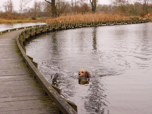baignade avec chien dans le nord
