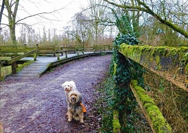 parc de la deûle avec chien