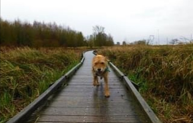 vacances avec chien dans le nord