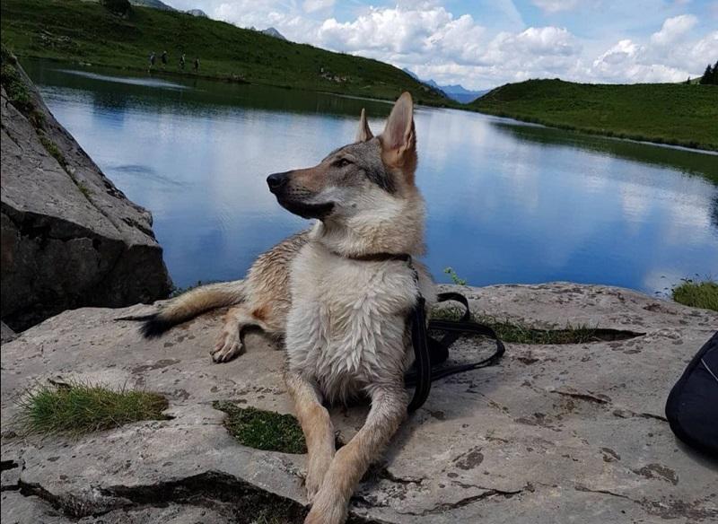 balade lac des fées avec chien