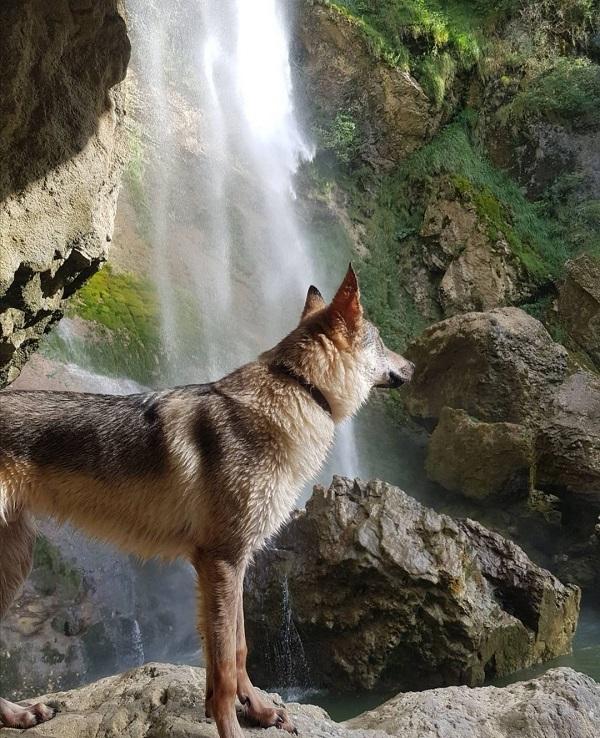 cascade de couz avec chien