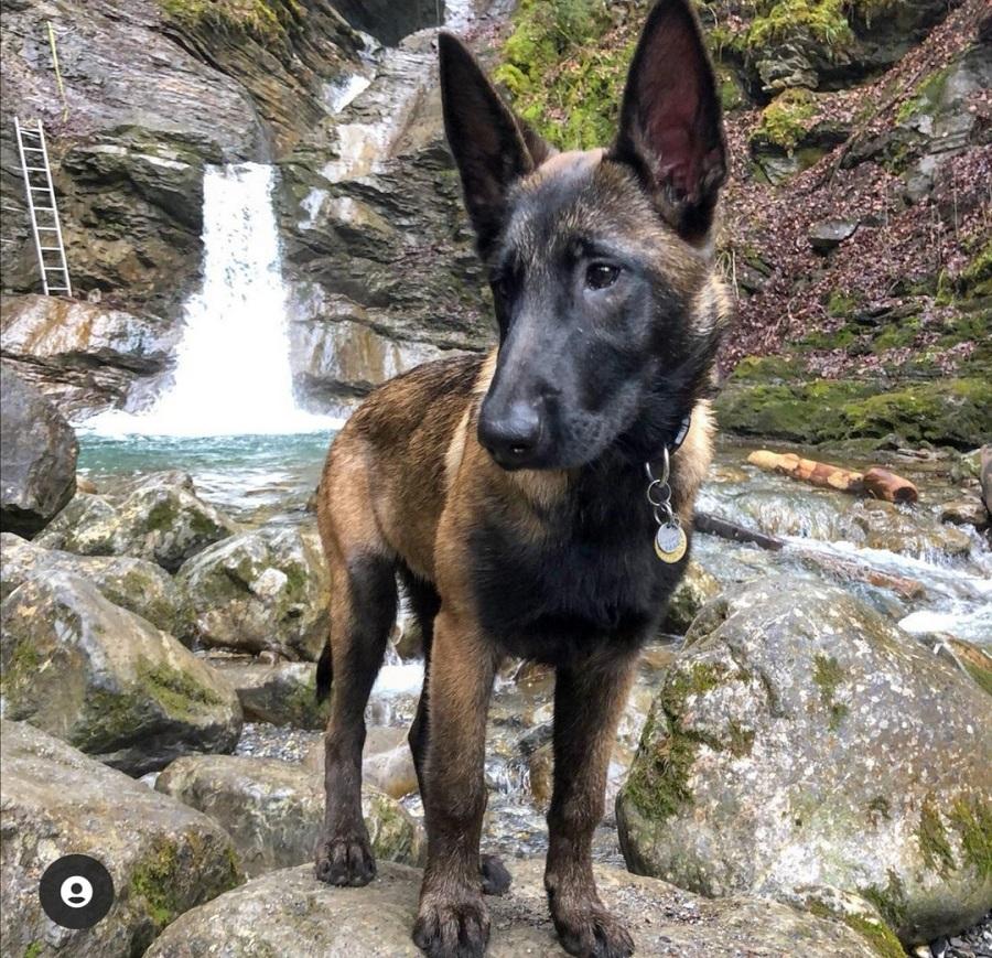 cascade de nyon avec chien haute-savoie